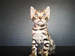 vender gato